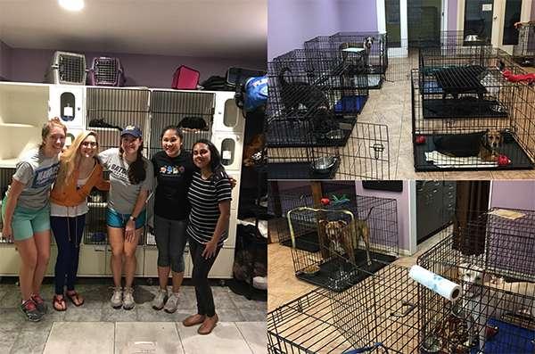 GVille Pet Rescue Fall 2017 Service Event